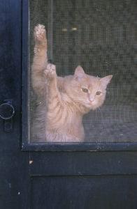 oldwoodscreendoor